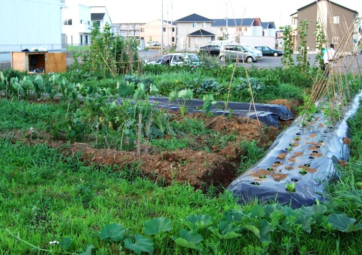 backyard-vegetable-garden-ideas-beauty-garden-wallpapers-1600x1132